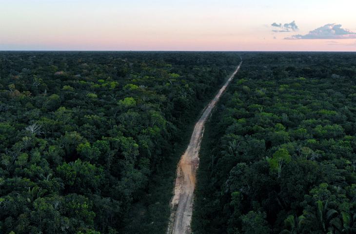 579 – A Luta Com A Floresta