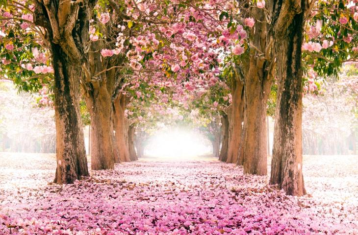 649 – Homenagem às Rainhas